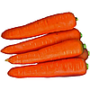Морковь Курода (Kuroda)10 кг.