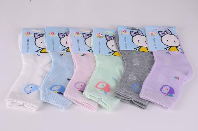 Детские носки сеточка Яблочко р.0-3 года (B2674/0-3) | 12 пар, фото 2