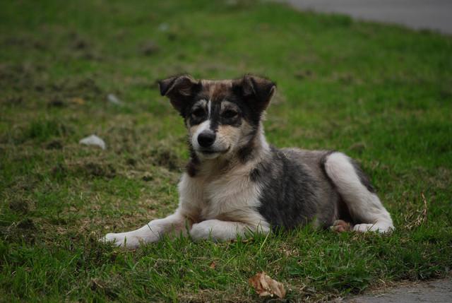 Корм для собак мини-пород Acana Adult Small Breed