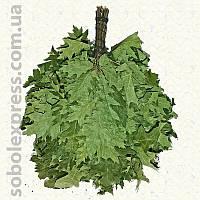 Веник из канадского дуба для бани и сауны