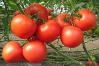 Насіння томату Картьє F1 1000 насінин Clause Seeds