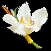 Свадебные бутоньерки | Орхидея