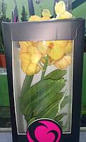 Ванда Орхидея желтого цвета (70см.)