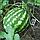 КРИМСОН СВИТ - семена арбуза, 10 000 семян, Syngenta, фото 3