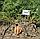 КОЛТАН F1 - семена моркови Нантес/Флакке (1,6-1,8), 100 000 семян, Bayer Nunhems , фото 3