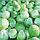 САРАТОГА F1 - семена капусты белокочанной, 2 500 семян, Bejo Zaden, фото 3