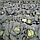 ТРАНСАМ F1 - семена капусты белокочанной,2 500 семян, Bejo Zaden, фото 3