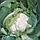 ФАРГО F1 - семена капусты цветной, 2 500 семян, Bejo Zaden, фото 2