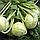 КОРИСТ F1 - семена капусты кольраби, 2 500 семян, Bejo Zaden, фото 2
