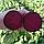 ЛАРКА - семена свеклы столовой, 25 000 семян, Rijk Zwaan, фото 3