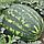 ВАРДА F1 - семена арбуза, 1 000 семян, Hazera, фото 3