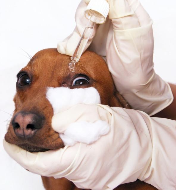 Препараты для глаз и носа