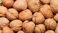 Продам Грецкий орех оптом, орехи грецкие очищенные, и кругляк