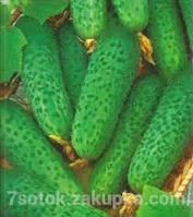 Весовые семена Огурца  Юлиан F1