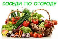 Лучшие и худшие предшественники и соседи плодово-ягодных и овощных культур