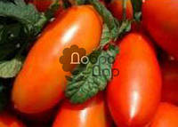 Семена Томата Алтей(красный)