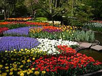 Садовые и комнатные цветы.Все для цветов.СЕМЕНА.