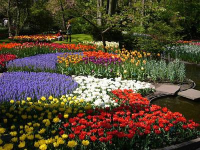 Садові і кімнатні квіти.Все для квітів.