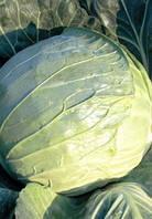 Насіння капусти б/к Капорал F1 10 000 насінин Clause Seeds