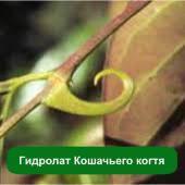 Гидролат Кошачьего когтя, 1 литр
