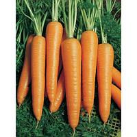Семена моркови Вита-лонга