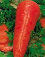 Семена моркови Корал