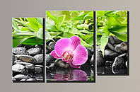 "Модульная картина на холсте из 3-х частей ""Орхидея на камнях"""