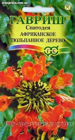 Спатодея Африканское Тюльпанное Дерево, семена