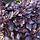Базилик Шесть Ароматов 0,3г, фото 3