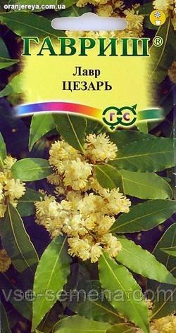 Лавр Благородный Вечнозеленый, 3шт.