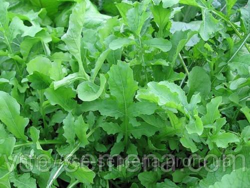 Рукола деликатесная, семена