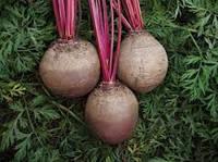 Семена свеклы Детройт 5 кг. Clause Seeds