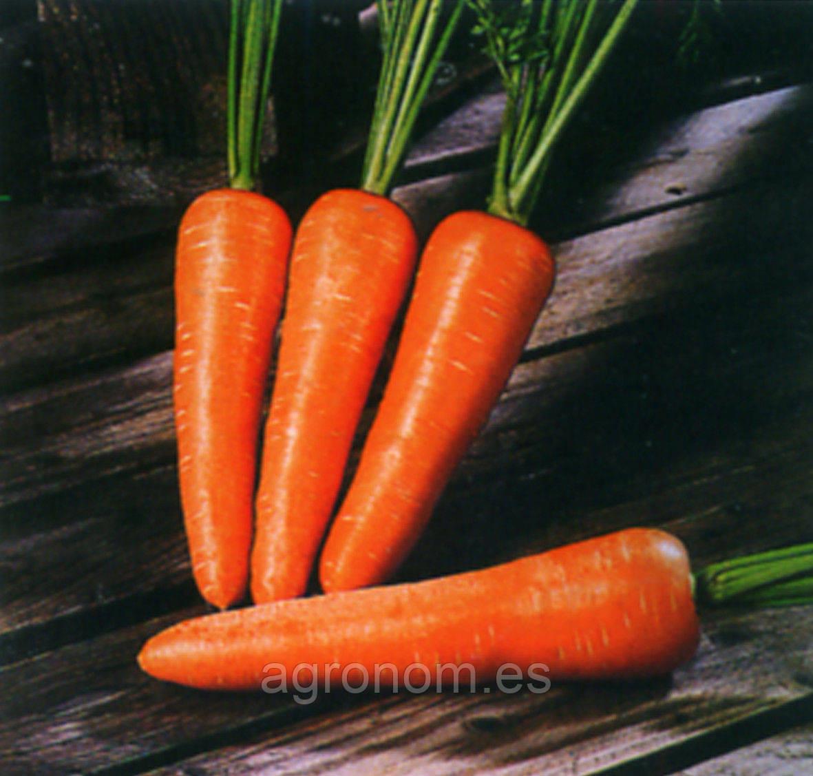 Насіння моркви Забарвлення 5 кг. Clause Seeds