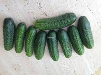 Семена огурца Роял F1 10 гр. Clause Seeds