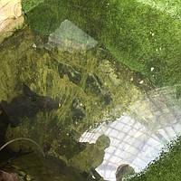 трава декоративная в террариуме