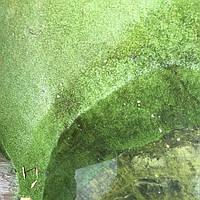 террариум с искусственной травой