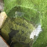 декоративная трава для террариума