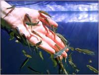 "Модули для fish-spa пилинга ""под ключ""."