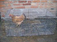 Клетка для торговли курицей 100х60х50