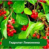 Гидролат Лимонника китайского, 1 литр