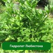 Гидролат Любистока, 1 литр