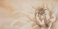 Декор Latina Ceramica Irina Marengo 250x500