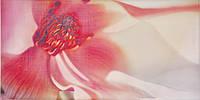 Декор Latina Ceramica Irina Rosa 250x500
