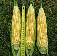 Семена кукурузы сахарной Лендмарк F1 1 кг. Clause  Seeds