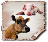Для чего нужны минеральные и витаминные добавки для животных?