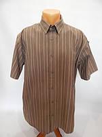 141РК Мужская рубашка с коротким рукавом ATTITUDE