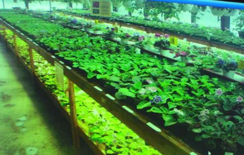 Искусственное освещение для растений. Введение.