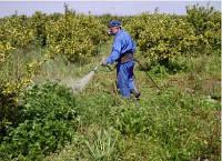Инструкция по применению гербицидов сплошного действия