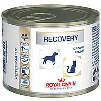 Royal Canin Recovery Лечебная консерва для собак во время восстановительного периода
