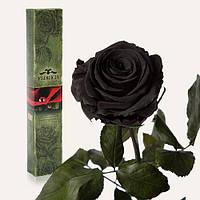 Долгосвежая живая роза Florich в подарочной упаковке  - ЧЕРНЫЙ БРИЛЛИАНТ (7 карат на коротком стебле)